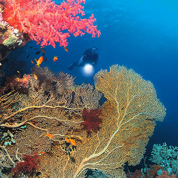 Korallenriff in Ägypten