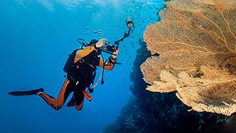Unterwasserfotografie Digital