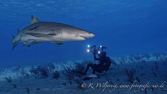 Face to face mit dem Hai